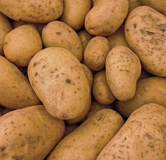 Template-340×327-aardappel