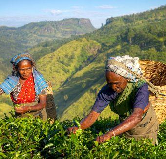 Fairtrade 2